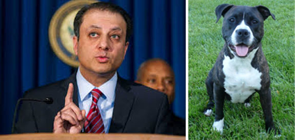 Preet Bharara, the U.S. Attorney for the Southern District of New York. and a pit bull