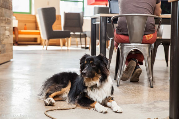 the-office-is-super-dog-friendly